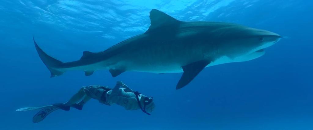 Shark Reef Mandalay Bay
